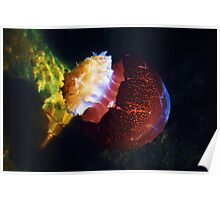 Jelly Fish Underwater Poster