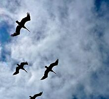 Seabirds Over Pacifica, California by Scott Johnson
