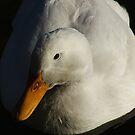 goose by saeeb