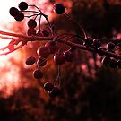 Autumn Berries by Mike Topley