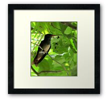 Refuge in the Shade Framed Print