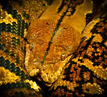 What did one snake say to another? Hiss Off! by Sara Wilcox