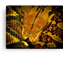 What did one snake say to another? Hiss Off! Canvas Print