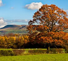 Flaming tree and pendle hill (aka hill hill hill) by Shaun Whiteman