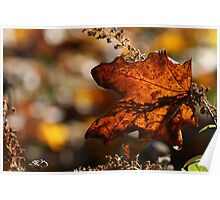 Maple Leaf Fall's Fall Poster