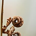 Autumn Curls by ElyseFradkin