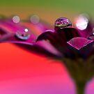 Purple Daisy Dream III by Melinda Gaal