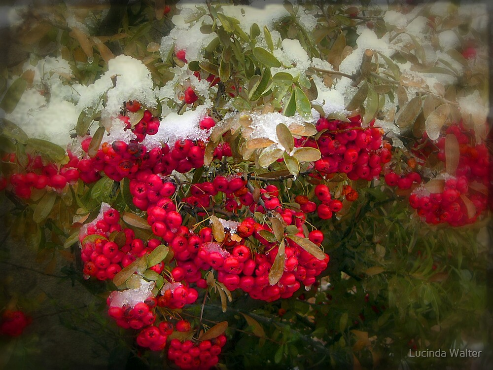 White on Red by Lucinda Walter