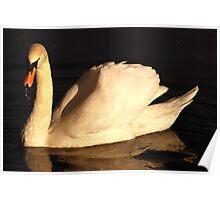 Swan Series 1. Poster