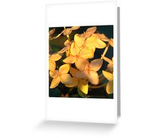 Belizean Yellow Greeting Card