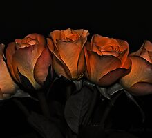 Roses by Dania Reichmuth
