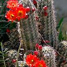 New Mexico Cactus by Kurt  Van Wagner