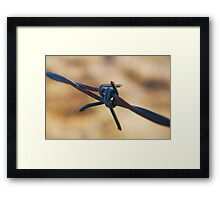 Along the wire Framed Print