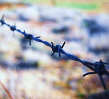 Barb Wire by littleribbons