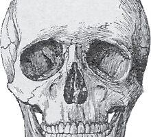 Skull by unitycreative