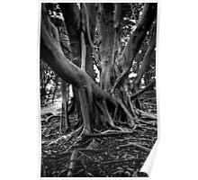 Rainforest Tree Poster