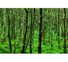 Irish Forest Photographic Print