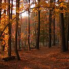 Autumn in the woods by elasita