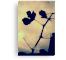 Abstract leaf and branch shadow Canvas Print