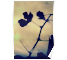 Abstract leaf and branch shadow Poster