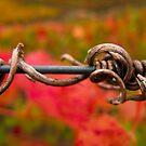 Dry vine branch by João Almeida