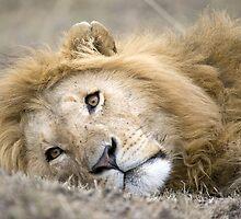 Mara Lion by Sue Earnshaw