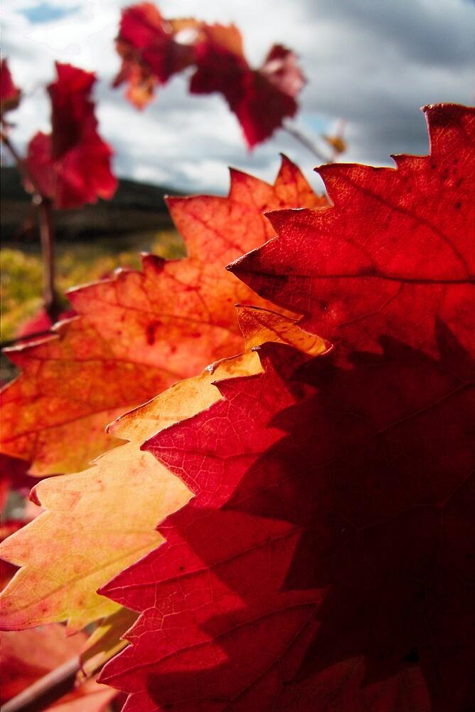Red pointy leaves by João Almeida
