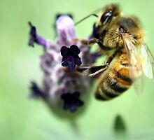 lavender bee by nadlizgol