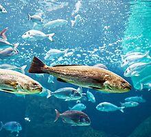 Big silver fishes by Artur Mroszczyk