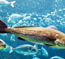 Big silver fishes Sticker