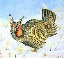 Greater Prairie Chicken by Marriet