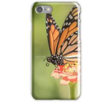 Monarch On Zinnia 3-2015 iPhone Case/Skin