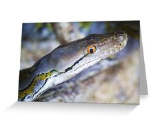 Reticulated Python Greeting Card