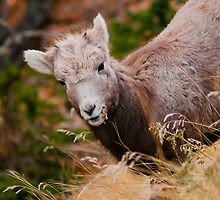 Baby Big Horn by Kerri Gallagher