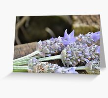 Lovely Lavender bunch Greeting Card