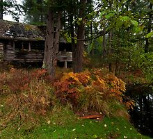 Mayne Island Abandoned Cabin - View from the Back by toby snelgrove  IPA