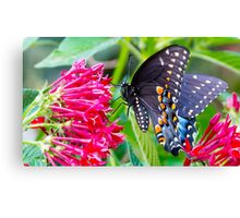 Brightfully Black Canvas Print