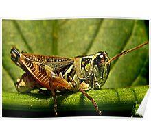 Green Grasshopper~The Country Hopper Poster