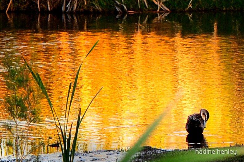 golden light at Herdsman Lake by nadine henley