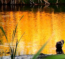 golden light at Herdsman Lake by nadine henley