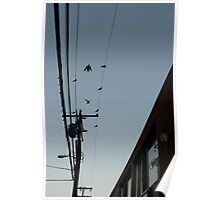 Birds on a Wire #3 Poster