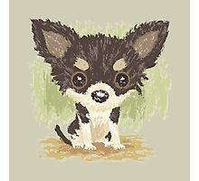 Chihuahua is sitting Photographic Print