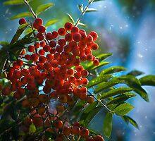 Autumn, mountain ash fine art photography by yuliart