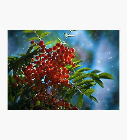 Autumn, mountain ash fine art photography Photographic Print