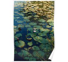 Waterlillies on a dam, Topaz Poster