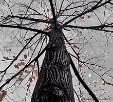 Tree, Central West End, St. Louis, Missouri by Crystal Clyburn