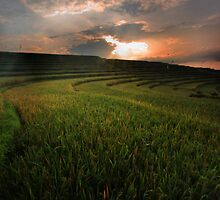Sunrise at Ricefield by I Nengah  Januartha