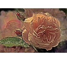 """Dreaming Roses..."" Photographic Print"