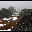 Alpine boulders  by Roseanna