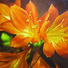 Clivias Flower Painting by Chris Hobel